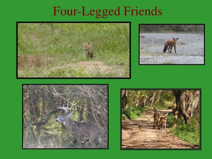 Four-Legged Friends