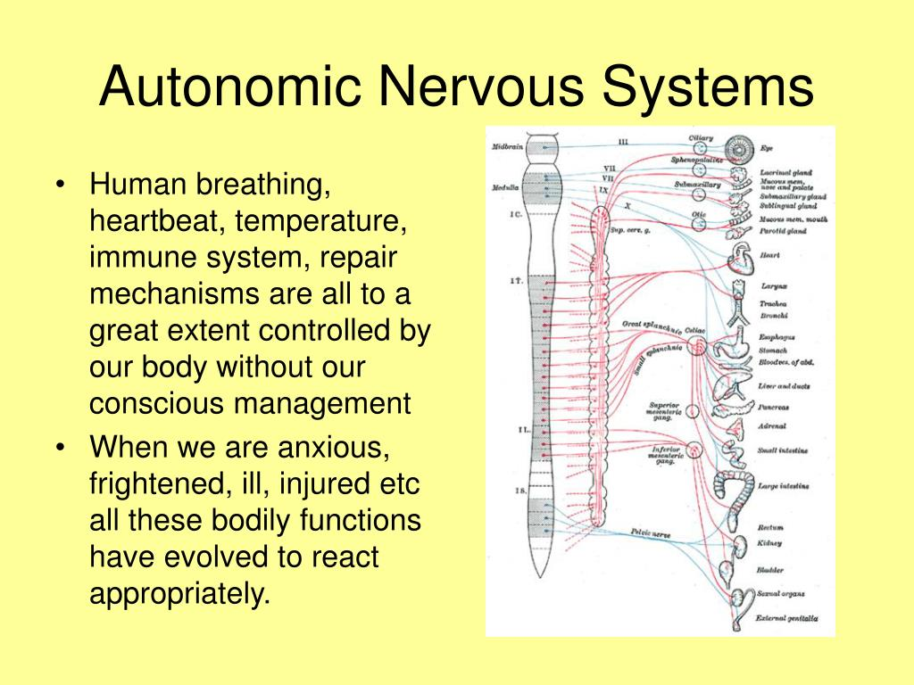 Autonomic Nervous Systems