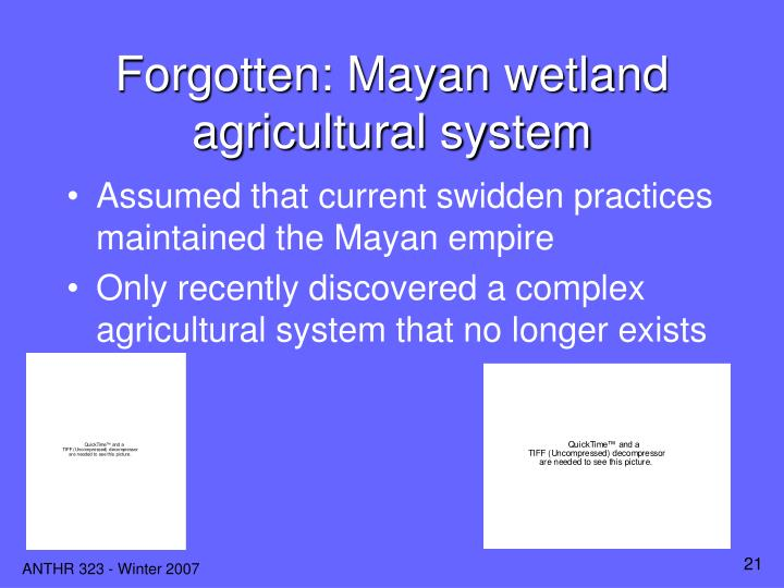 Forgotten: Mayan wetland agricultural system
