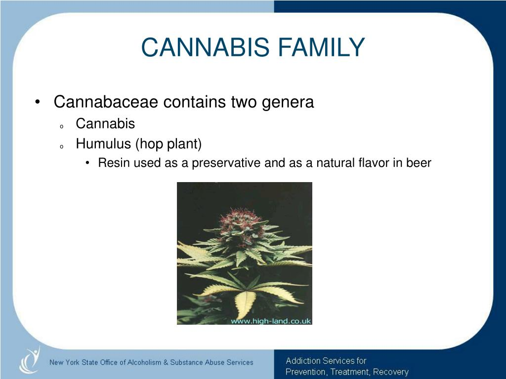 CANNABIS FAMILY