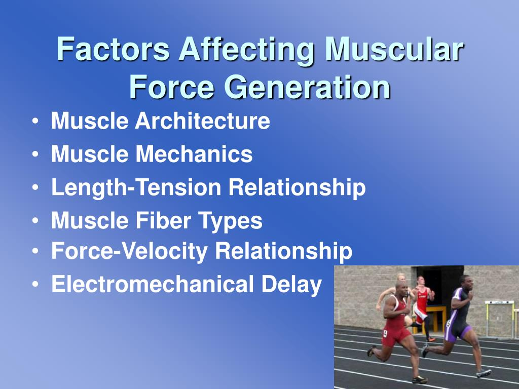 Factors Affecting Muscular Force Generation