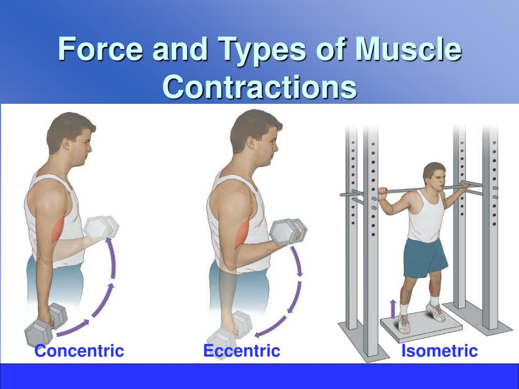 Force and Types of Muscle Contractions