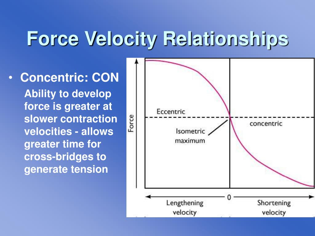Force Velocity Relationships