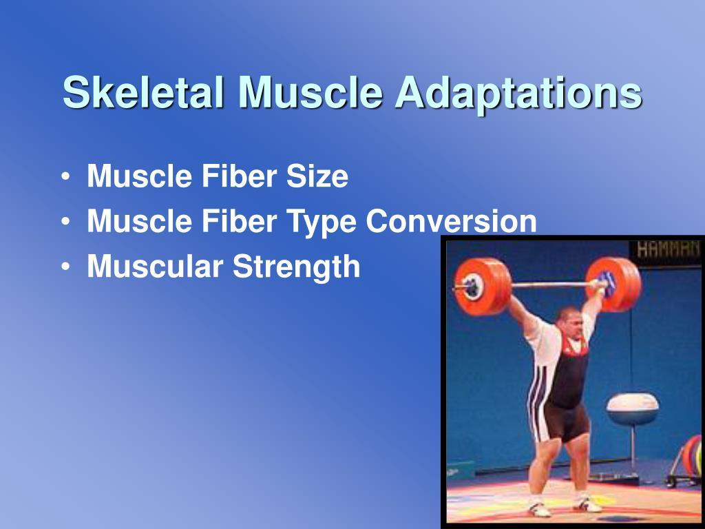 Skeletal Muscle Adaptations