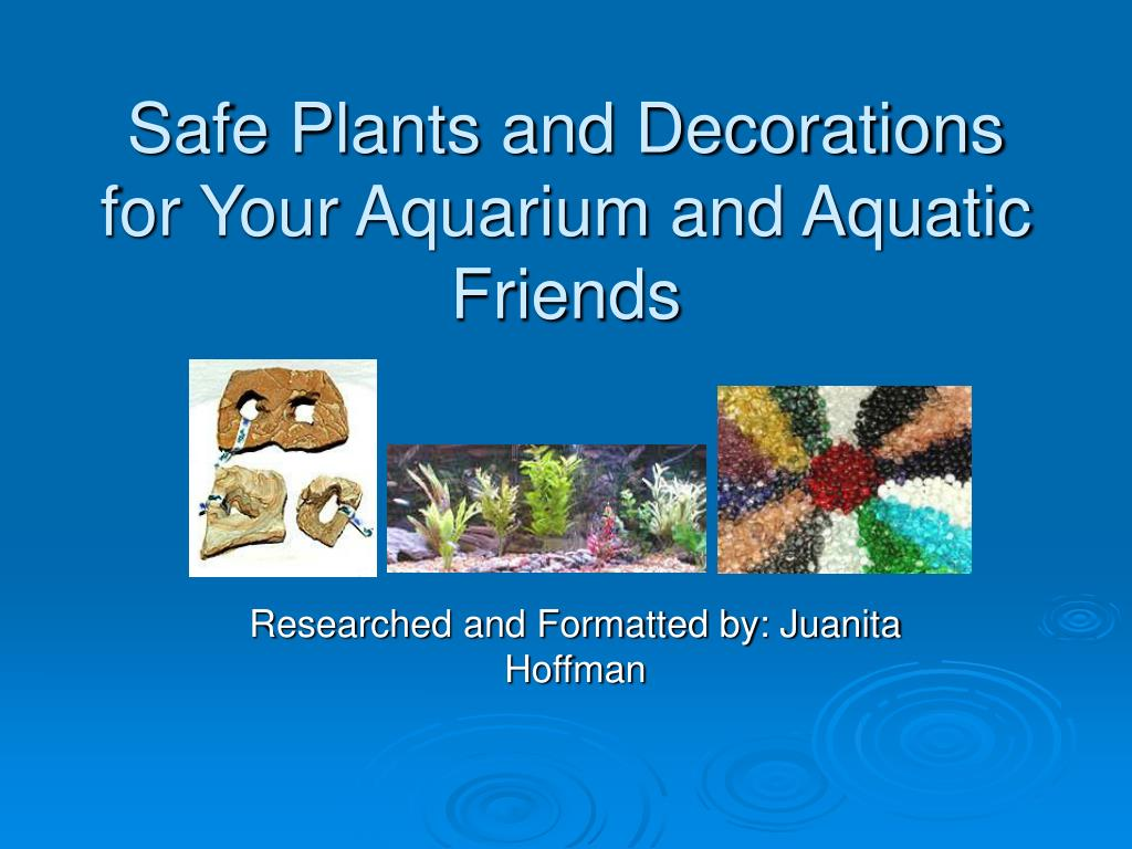 safe plants and decorations for your aquarium and aquatic friends