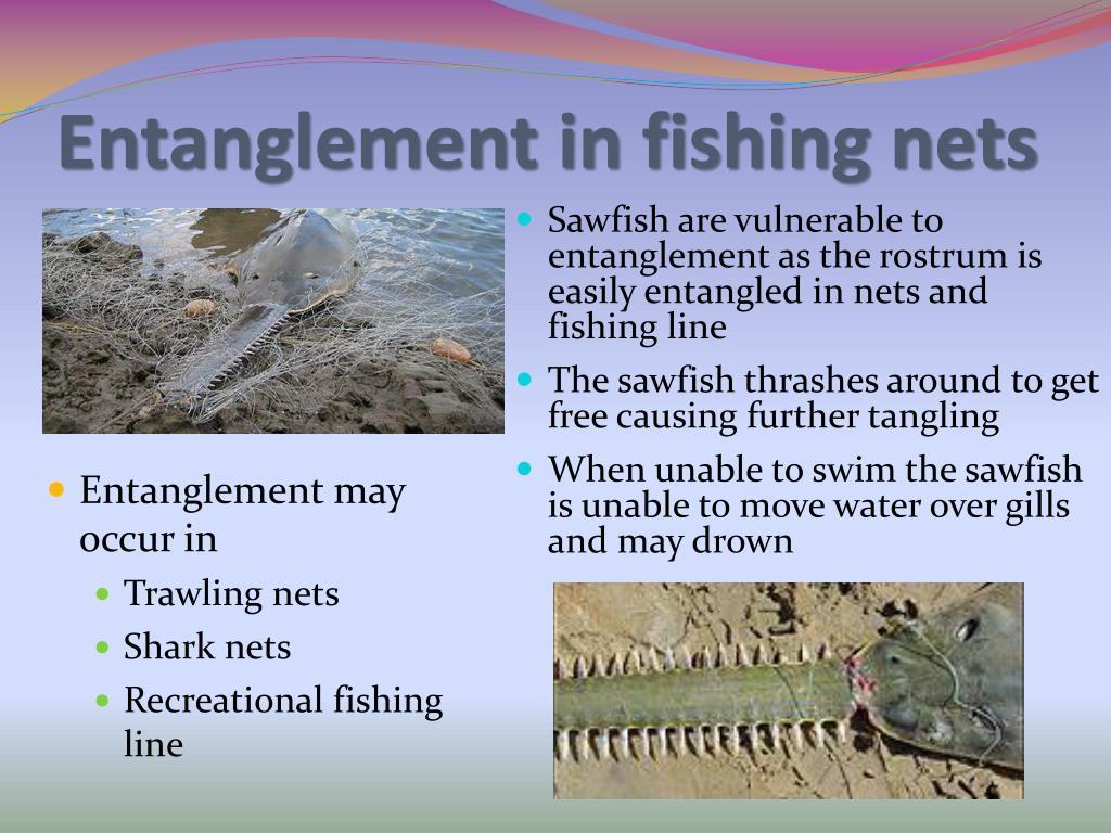 Entanglement in fishing nets