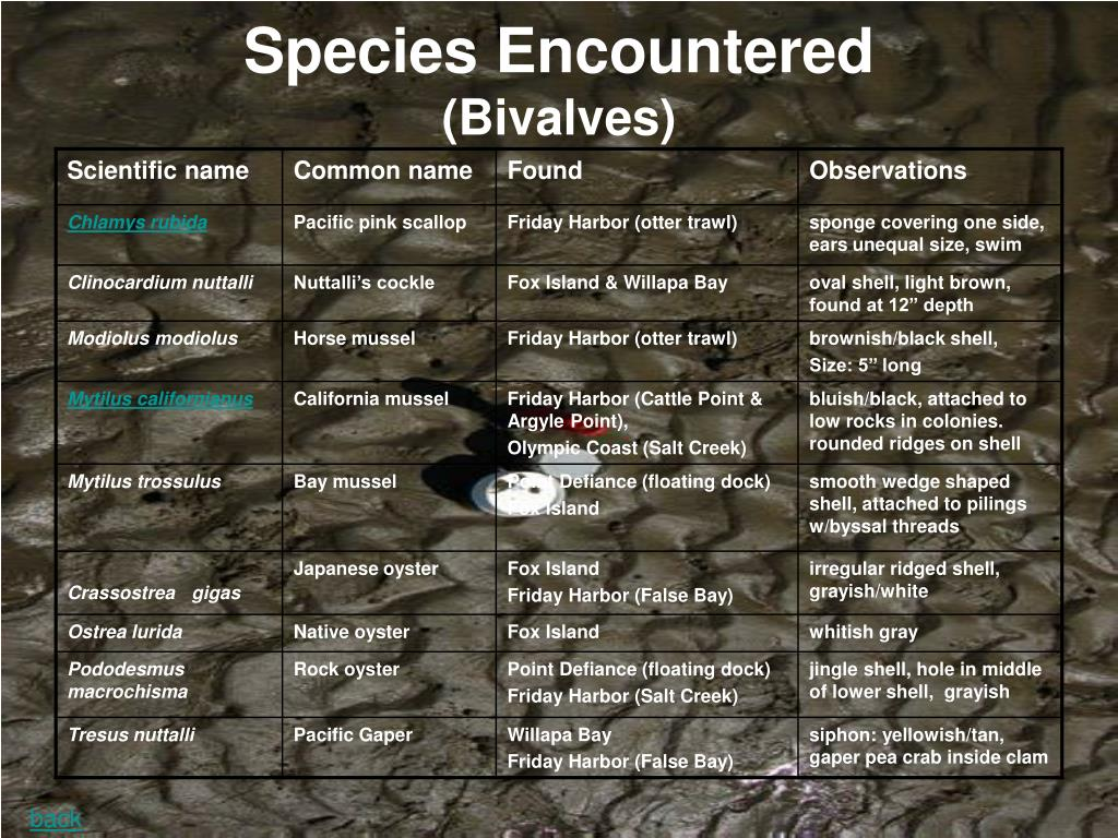 Species Encountered