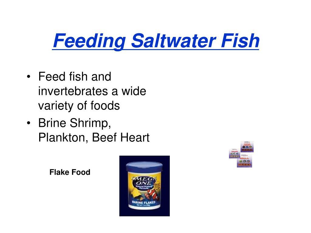 Feeding Saltwater Fish