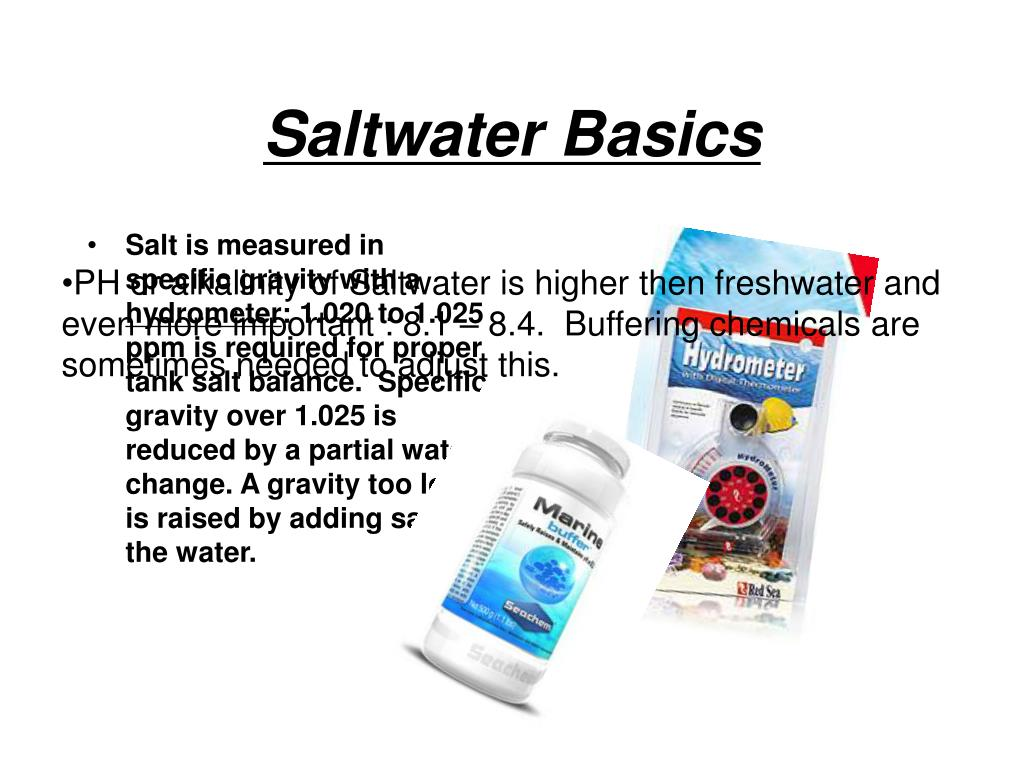 Saltwater Basics