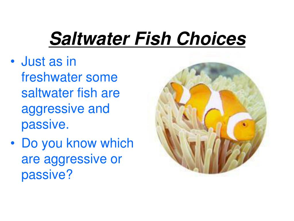 Saltwater Fish Choices