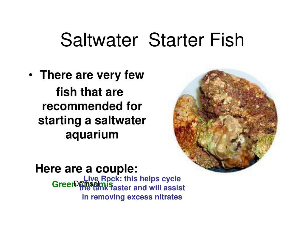 Saltwater  Starter Fish