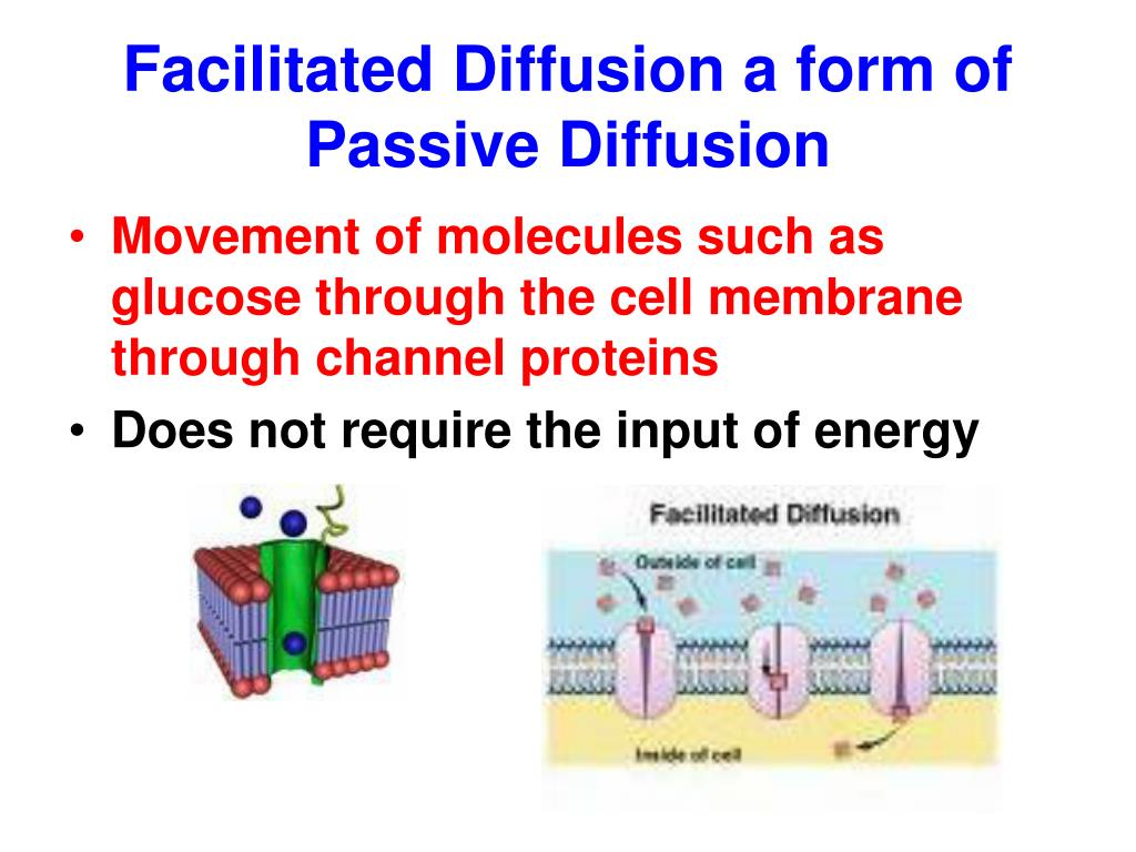 Facilitated Diffusion a form of Passive Diffusion