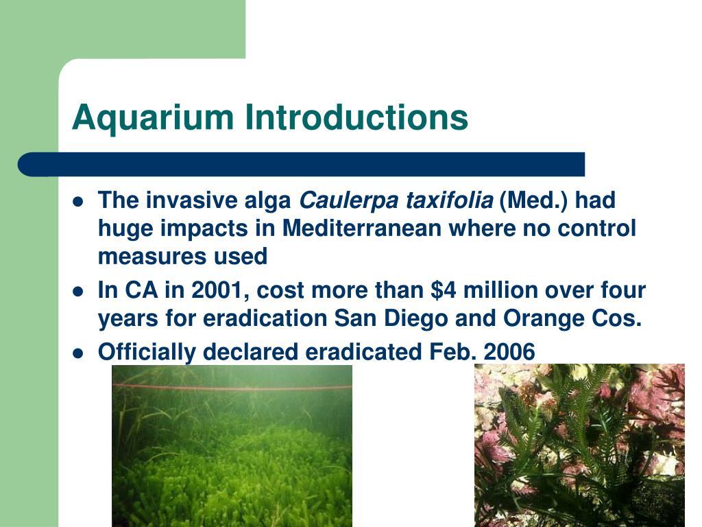 Aquarium Introductions