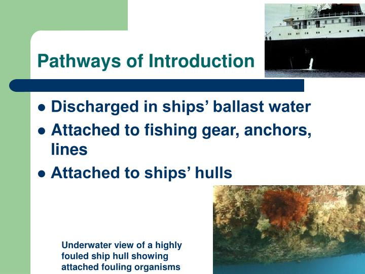 Pathways of introduction3