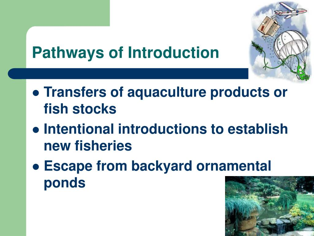 Pathways of Introduction