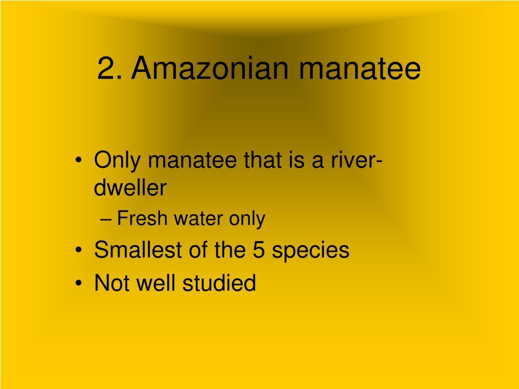 2. Amazonian manatee