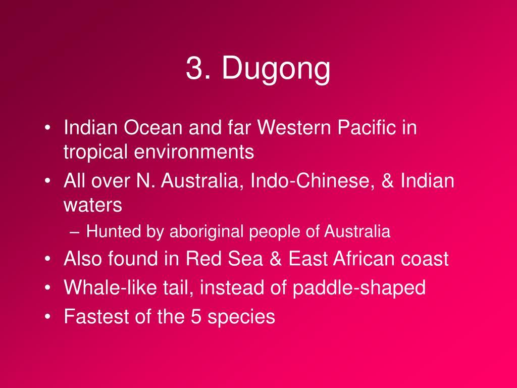 3. Dugong