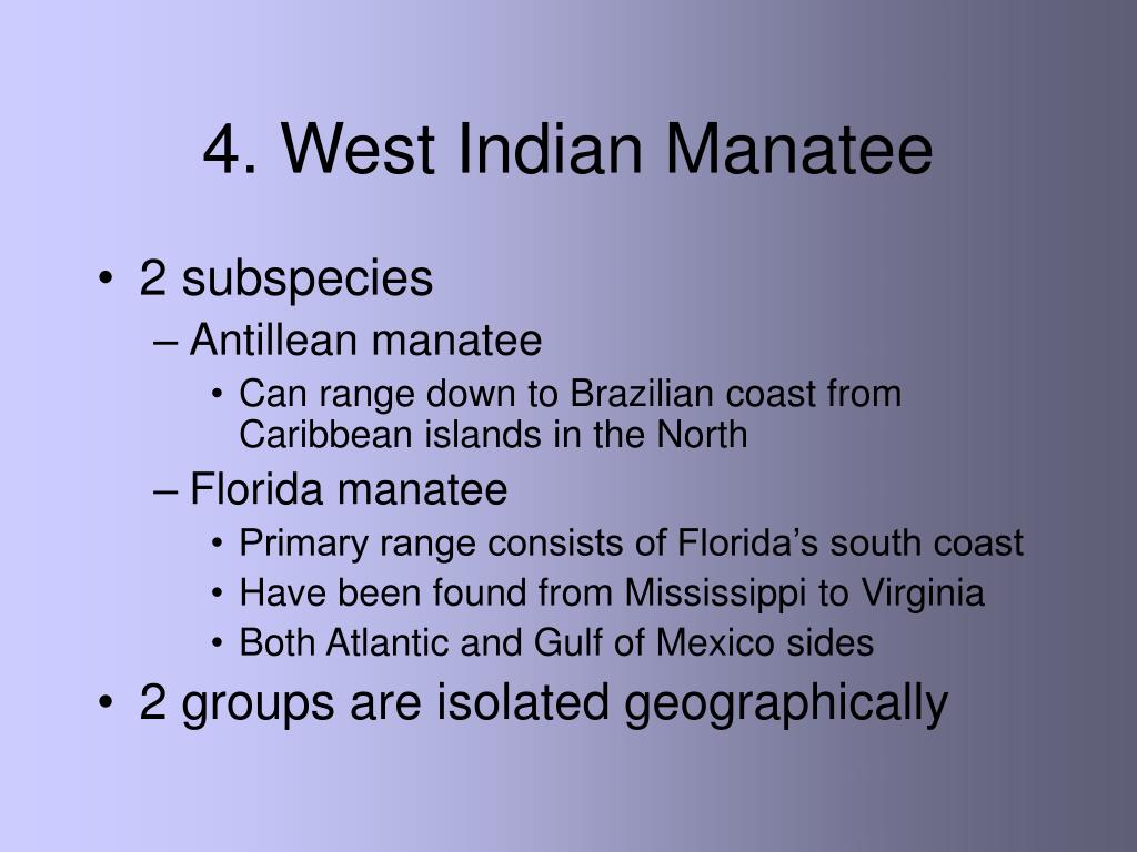 4. West Indian Manatee