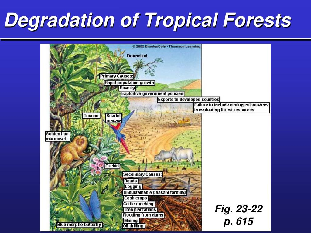 Degradation of Tropical Forests