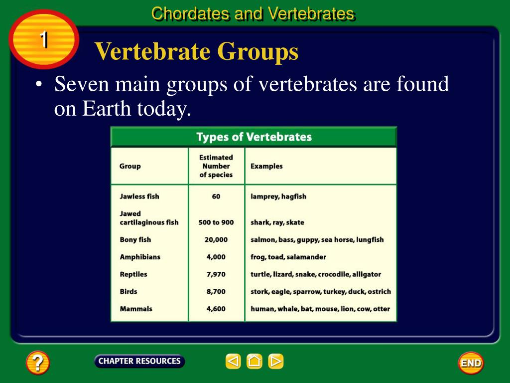 Chordates and Vertebrates