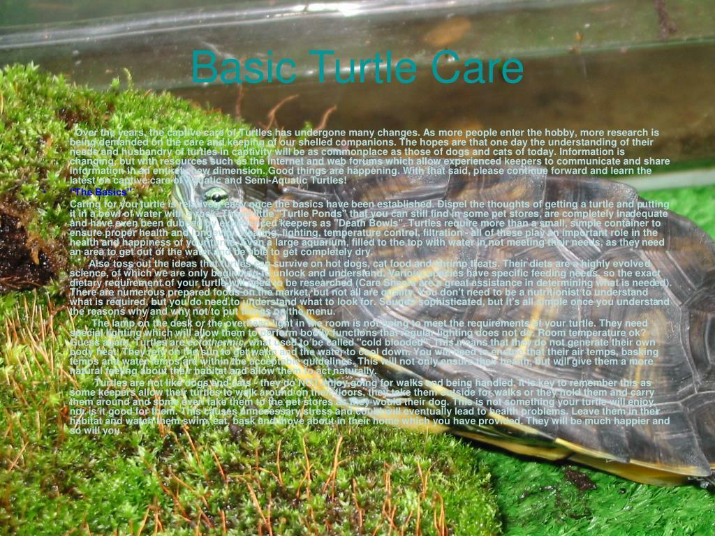 Basic Turtle Care