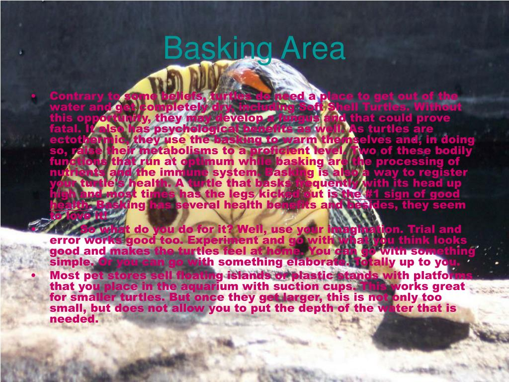 Basking Area