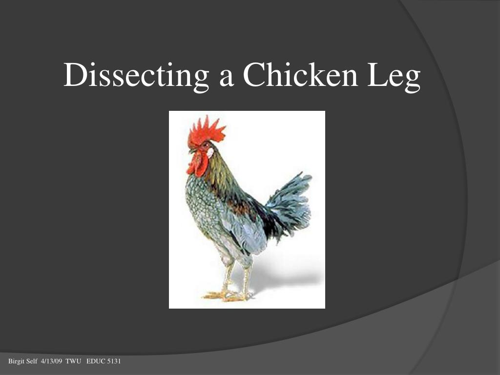 Snap Ppt Dissecting A Chicken Leg Powerpoint Presentation Id621010 Dissection Diagram For Pinterest