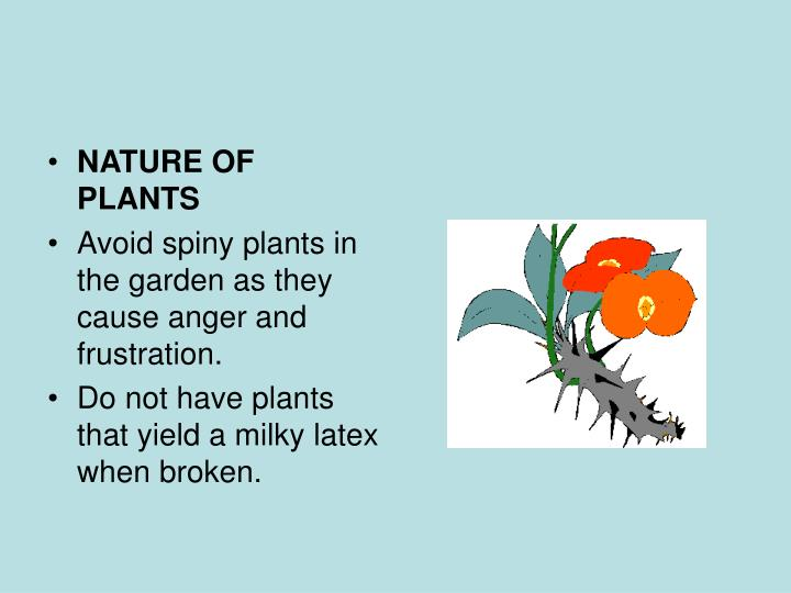 NATURE OF PLANTS