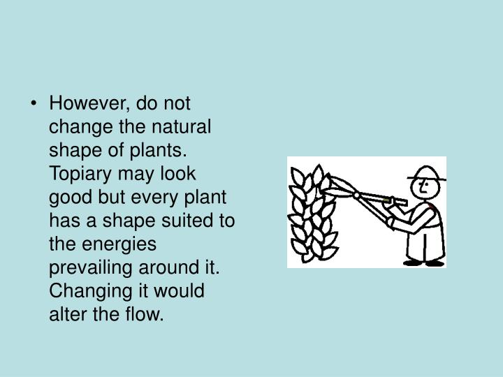 However, do not change the natural shape of plants. Topiary may look good but every plant has a shape suited to the energies prevailing around it. Changing it would alter the flow.