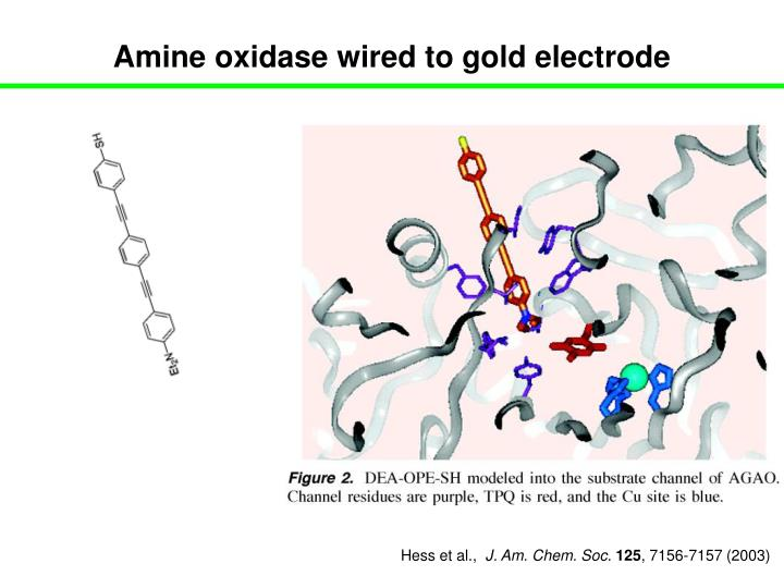 Amine oxidase wired to gold electrode
