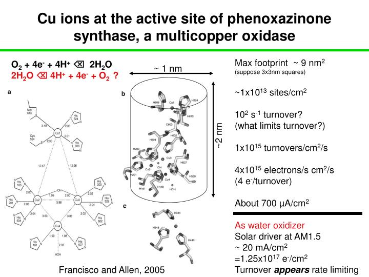 Cu ions at the active site of phenoxazinone synthase, a multicopper oxidase