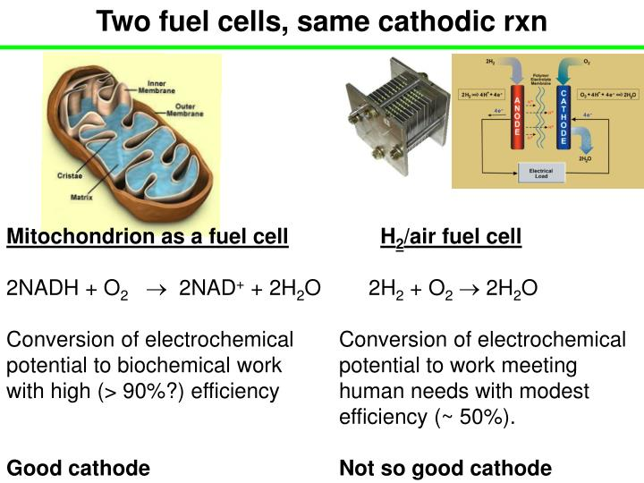 Two fuel cells, same cathodic rxn