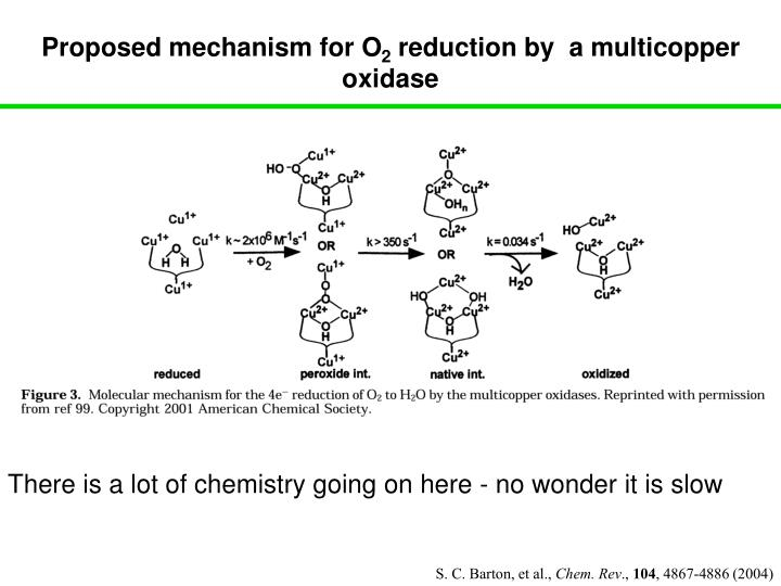 Proposed mechanism for O