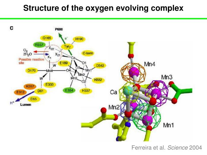 Structure of the oxygen evolving complex