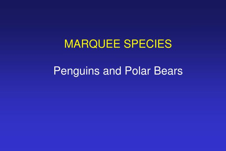 MARQUEE SPECIES