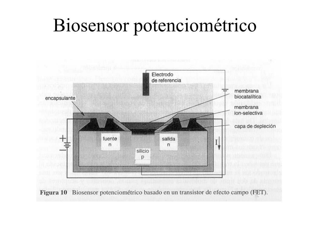 Biosensor potenciométrico