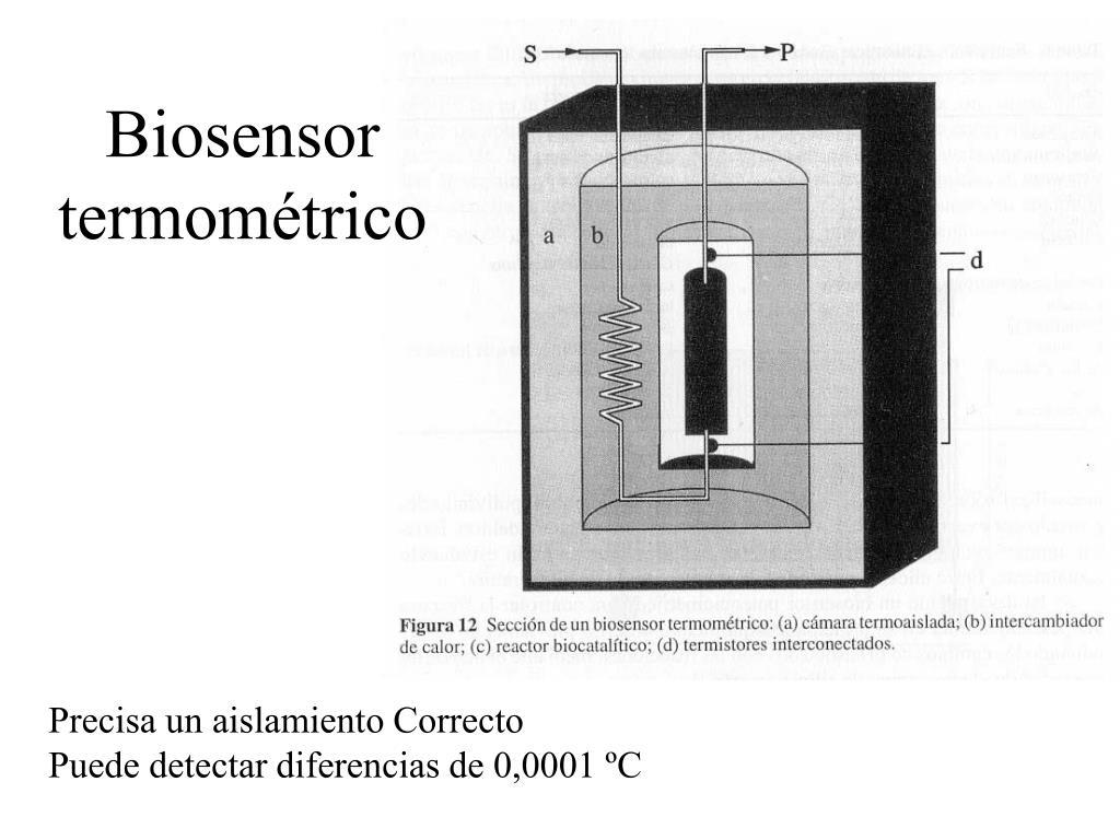 Biosensor termométrico