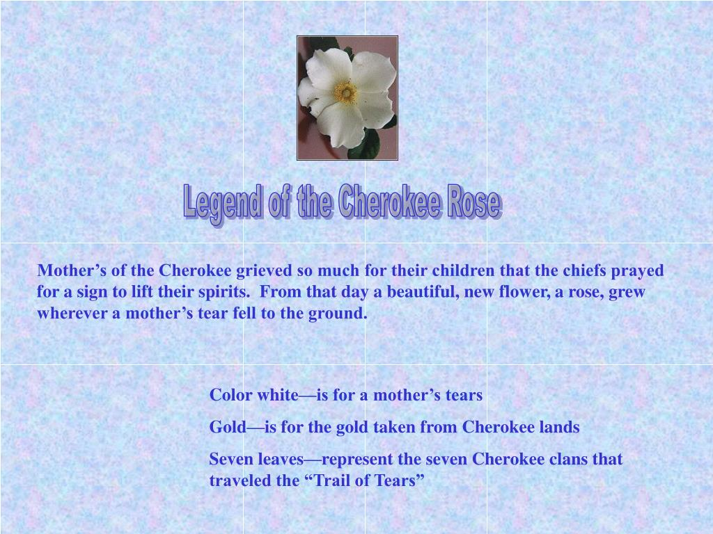 Legend of the Cherokee Rose
