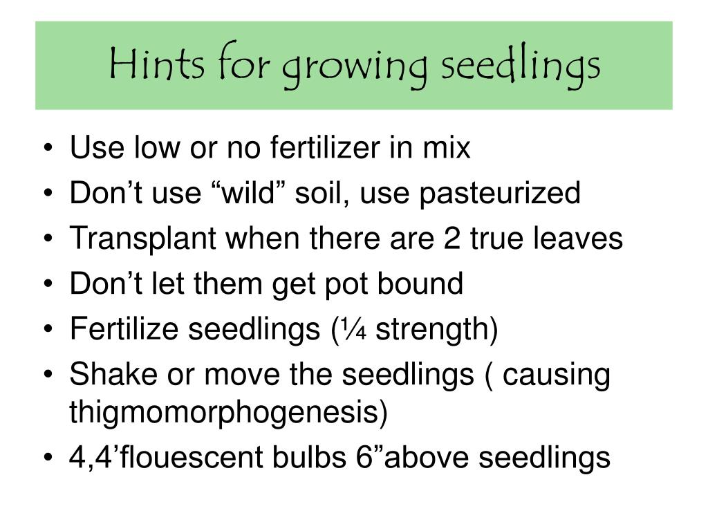 Hints for growing seedlings