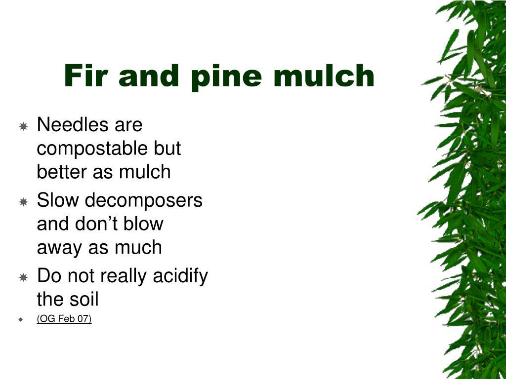 Fir and pine mulch