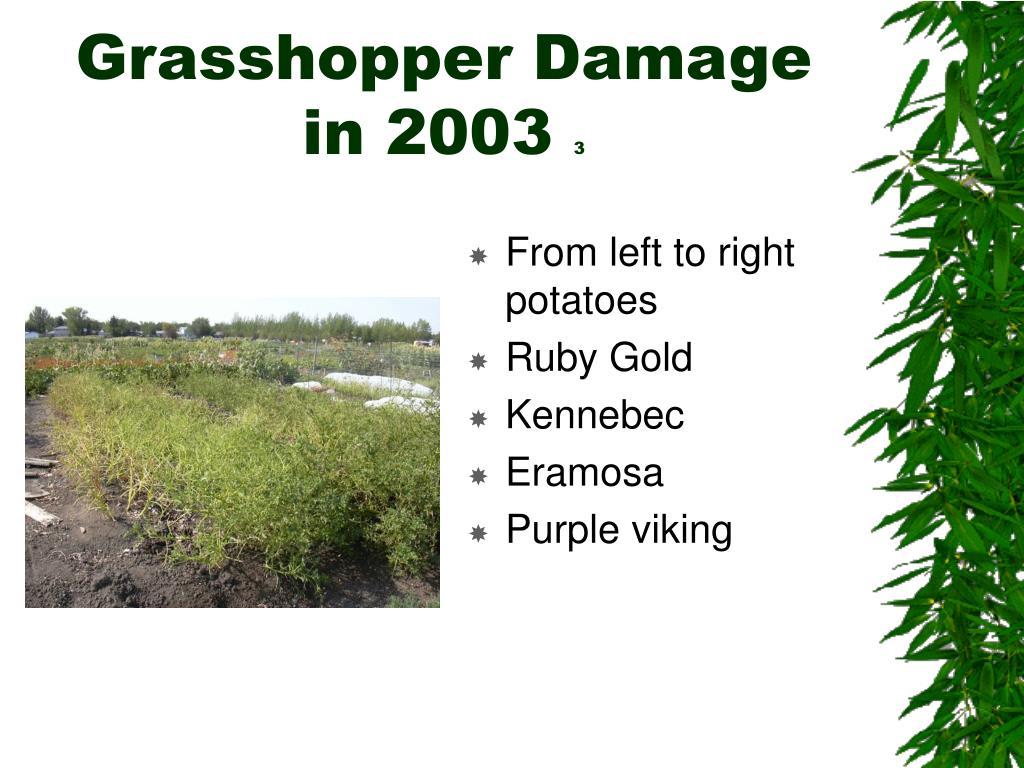 Grasshopper Damage in 2003