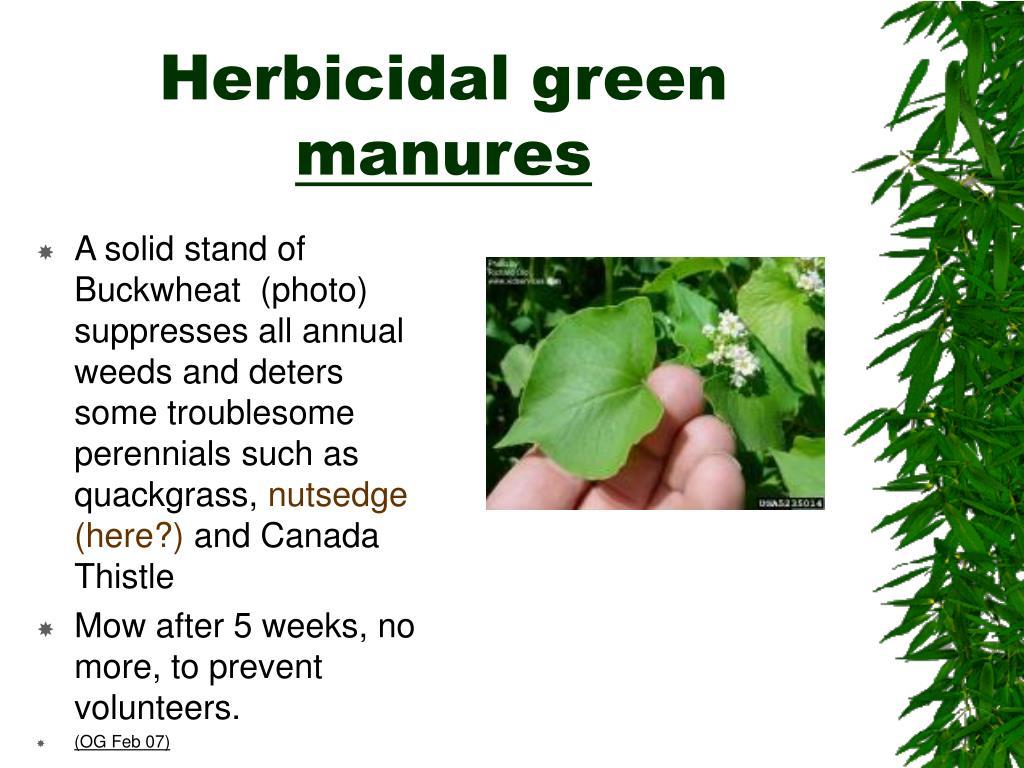 Herbicidal green