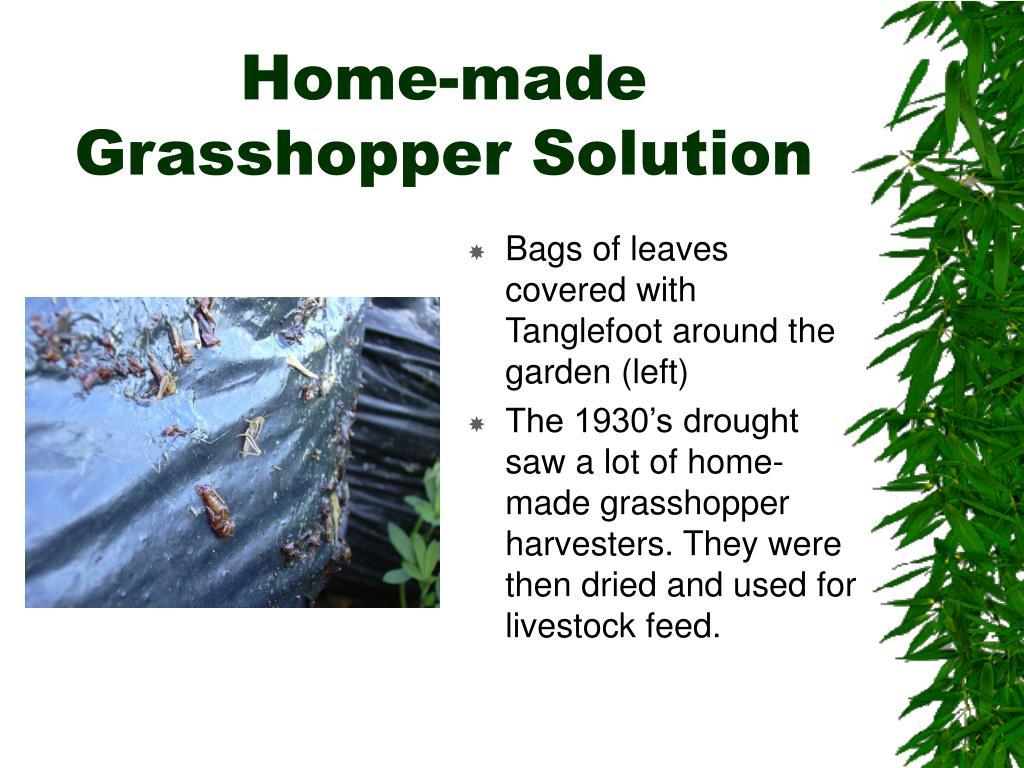 Home-made Grasshopper Solution