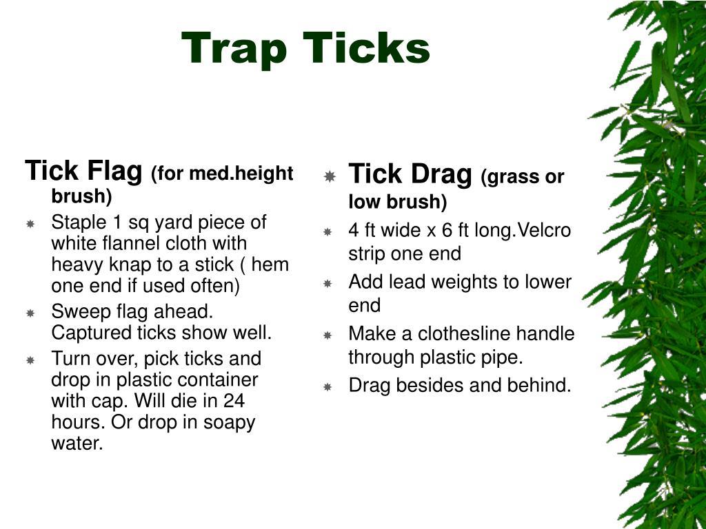 Tick Flag