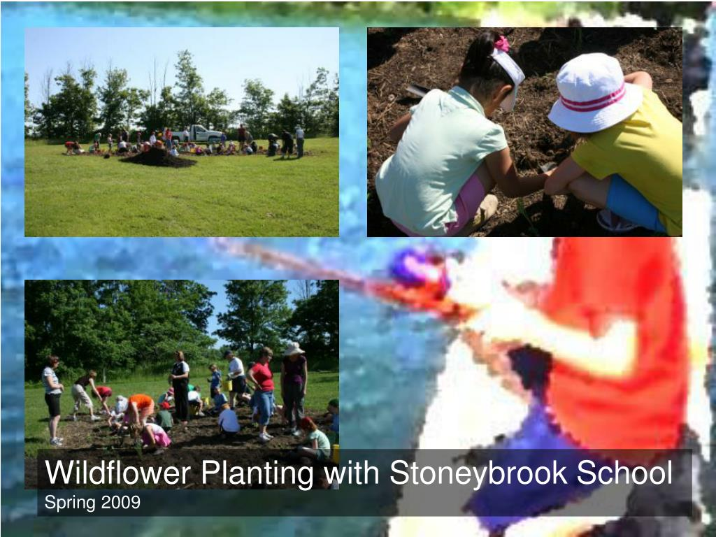 Wildflower Planting with Stoneybrook School