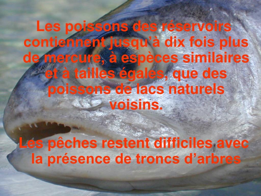 Les poissons des réservoirs contiennent jusqu'à dix fois plus de mercure, à espèces similaires et à tailles égales, que des poissons de lacs naturels voisins.