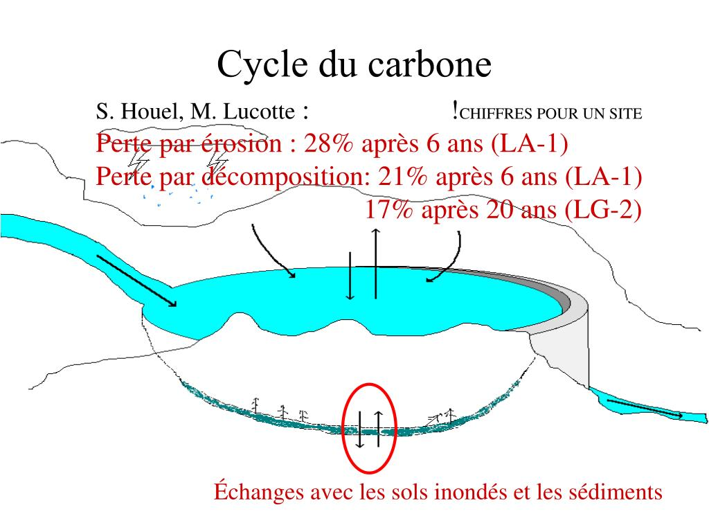 Cycle du carbone