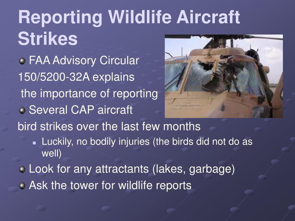 Reporting Wildlife Aircraft Strikes