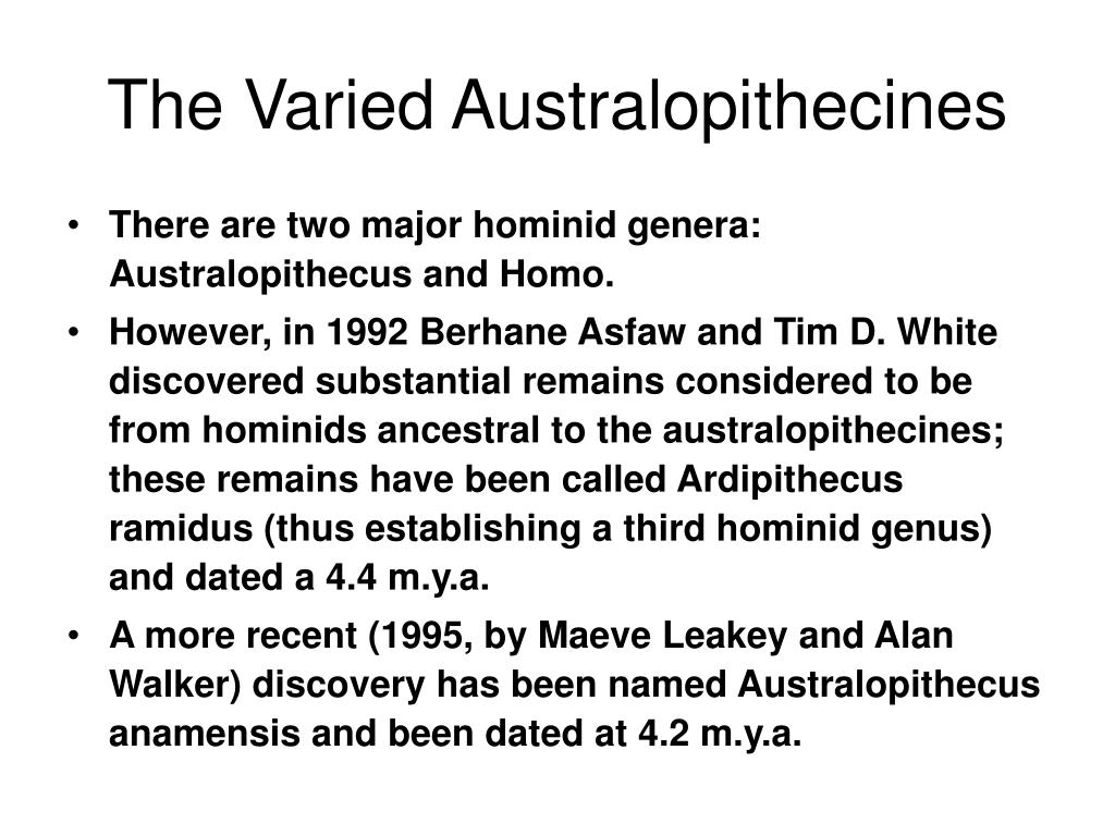 The Varied Australopithecines