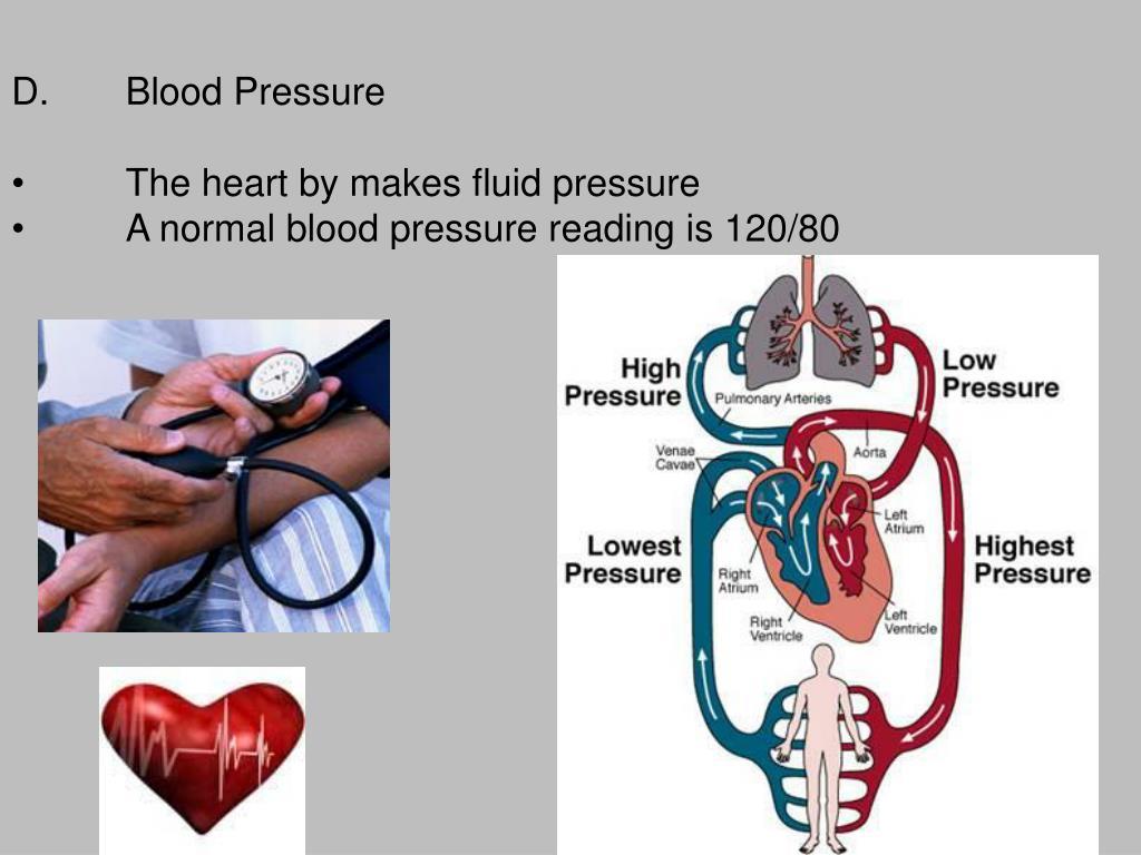 D.Blood Pressure